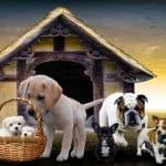 סוגים שונים של כלבים